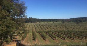 """Proyecto agrícola de Cerezas en """"Vista Hermosa"""", Futrono, Región de Los Ríos"""